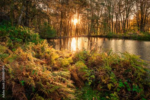 Photo Sunrise at Fishpond Wood