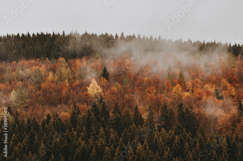 Fotografija Autmn in Germany - Herbst im Sauerland