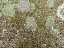 A Lot Of Dark Green Moss And Light Green Lichen