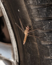 Dragonfly Perched On The Wheel...