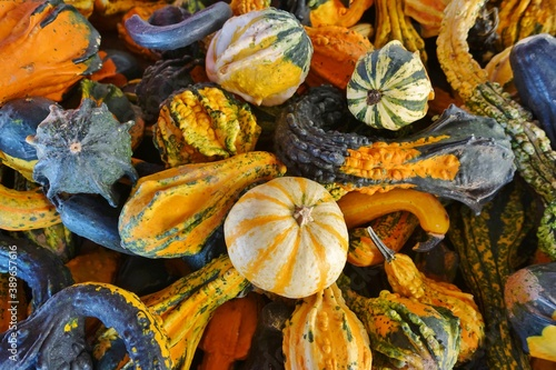 Fotomural Colorful orange and green decorative mini pumpkins and gourds in the fall