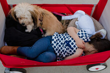 Little Girl Laying In A Red Wagon With A Small Dog