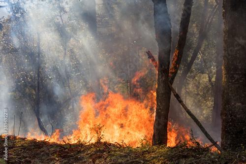 Valokuvatapetti Incêndio florestal com labaredas de fogo