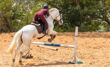 Saltando Obstáculo Com Cavalo