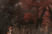 Wooded Forest Trees With Golde...