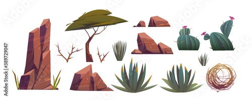 Fotografija Tumbleweed, cactuses and rocks of sand desert in Africa