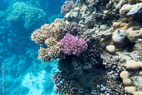Colorful coral reef at the bottom of tropical sea, hard corals, underwater lands Fototapete