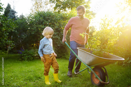 Papel de parede Gardener man and little child pushing wheelbarrow with plant seedlings in backyard