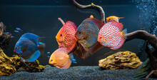 Colorful Fish From The Spieces...