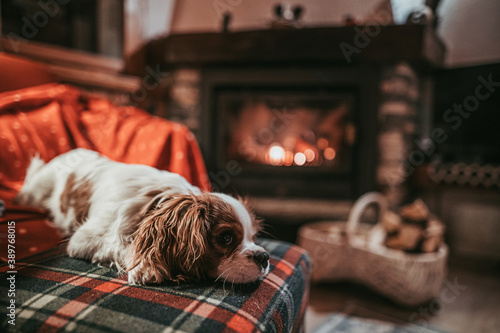 Fotografía Cute Little Puppy Resting By The Fireplace at Home