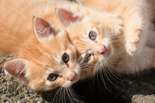 Two Adorable Kittens Playing W...