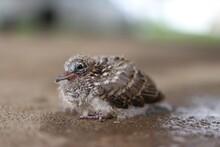 A Single Baby Bird Sitting On ...