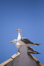 Seagulls Resting On A Roof