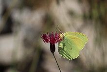 Selective Focus Shot Of A Comm...