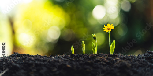 Fotografering plant seeding growing step concept in garden and sunlight