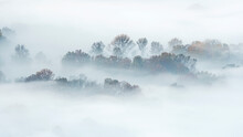 Autumn Forest Wrapped By Mist ...