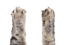 Cat's Paws On White Background.