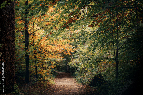 Fototapeta Fall Autumn Season Picture of a small trail in a forest as the leaves begin to t