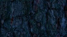 Beautiful Old Tree Bark Close-up