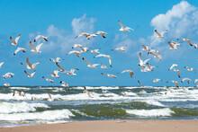 Beautiful Black-headed Seagull...