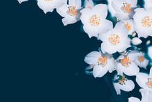 White Jasmine The Branch Delic...