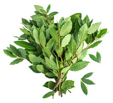 Bay Leaves Isolated On White B...