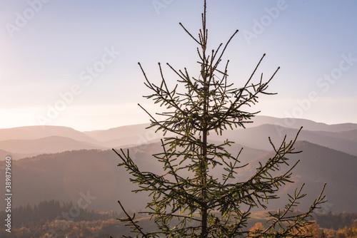 Landscape of Autumn Carpathian Mountains Canvas Print