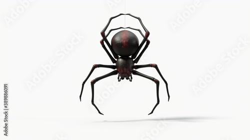 Obraz na plátne hanging black spider