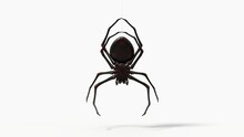 Hanging Black Spider. With Red...