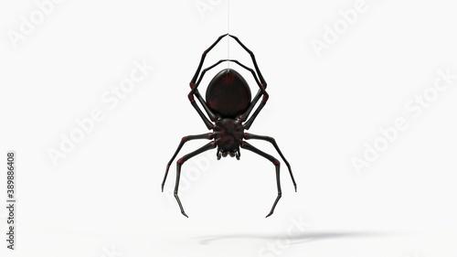 Fotografie, Tablou hanging black spider