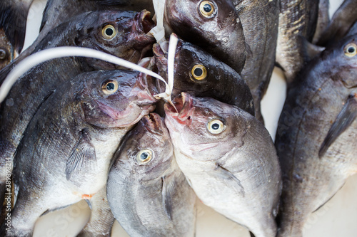 Fotografija Close up image of a bunch of freshly caught fish at the fish market in Kalkbay i