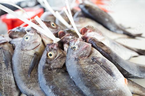 Slika na platnu Close up image of a bunch of freshly caught fish at the fish market in Kalkbay i