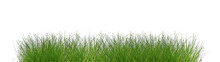 Green Grass Isolated On White Background. Tall Green Grass On White.