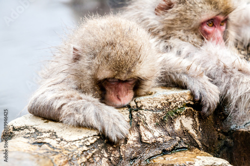 Photo Cute Japanese Snow monkey sitting in a hot spring, Japan