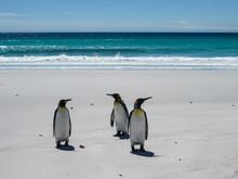 Volunteer Beach, Falkland Isla...