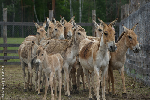Fotografía Herd of horses in the aviary