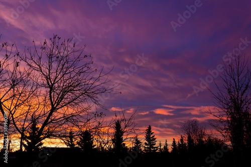 Obraz na plátně Sunrise over Trees, Lloydminster Alberta Canada