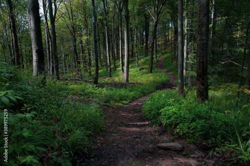 Fototapeta Ścieżka przez las obraz