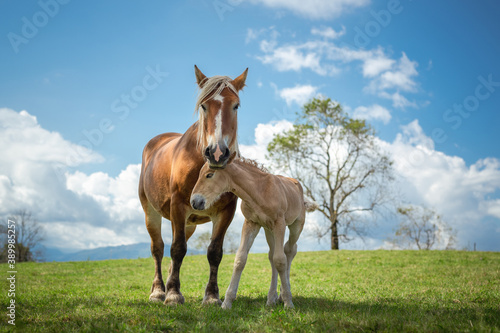 Papel de parede Mare and foal in the mountains meadow