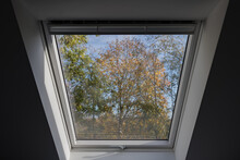 Interior View At Closed White Tilt Window Skylights At Attic And Sunny View Through Glass With Defocused Of Treetop And Autumn Leaf.