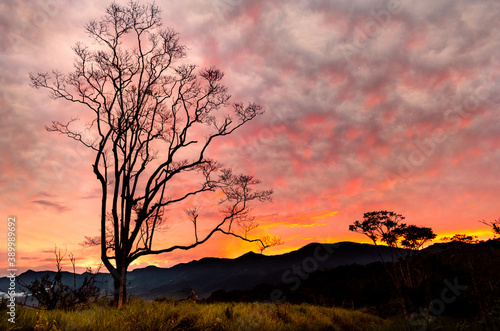 Silhouettes of trees under the colorful sunset sky