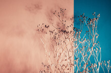 Home Interior Floral Decor From Natural Dry Flowers Or Twigs. Strong Shadows On Pink And Blue Background
