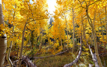 A View Into A Colorful Grove O...