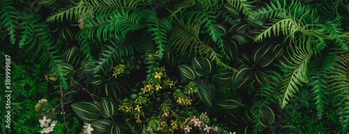 Tela Monstera green leaves or Monstera Deliciosa in dark tones(Monstera, palm, rubber plant, pine, bird's nest fern), background or green leafy tropical pine forest patterns for creative design elements