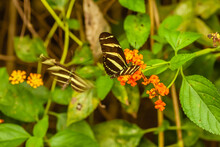 Beautiful Butterflies And Flowers From Costa Rica