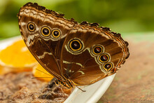Beautiful Butterflies And Flow...