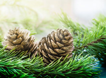 Two Pine Cones On A Coniferous Tree