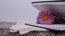 Lilac Pink Chrysanthemum Flowe...