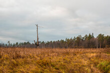 A Lone Tree Burned By Lightnin...