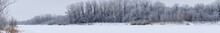 Panorama Winter Forest With Ba...
